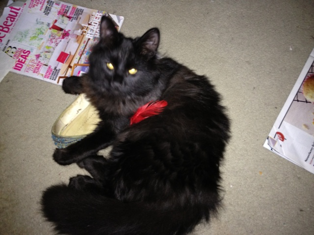 It wasn't me .... the red feather is evidence of nothing
